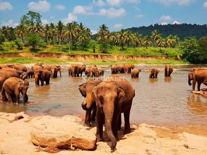 12 Sri Lanka
