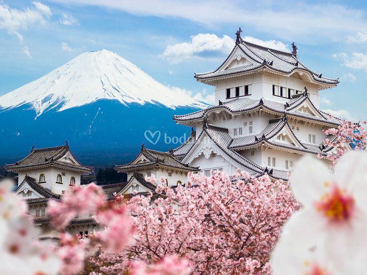 18 Japón