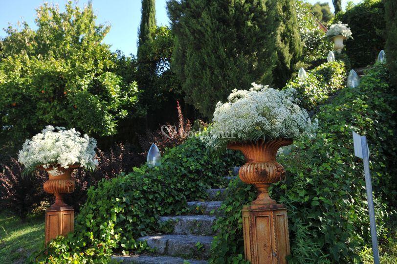 Orquidia Flors