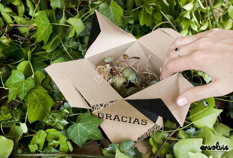 Caja para cactus bodas
