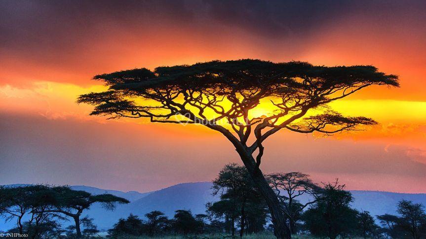 Serengueti, Tanzania