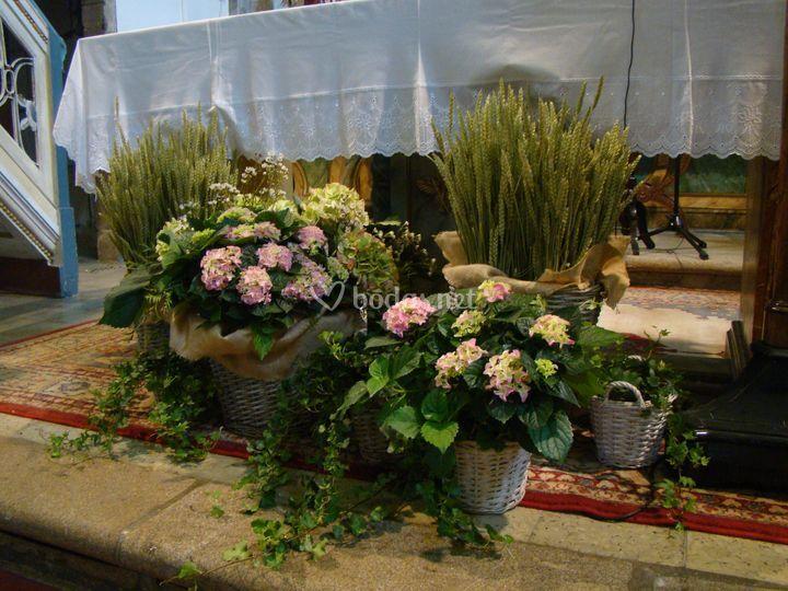 Hortensias y trigo