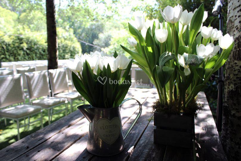 Detalle de  tulipanes
