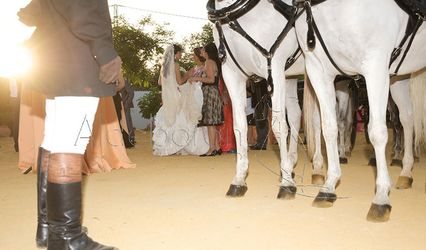 Tango de Fiesta 1