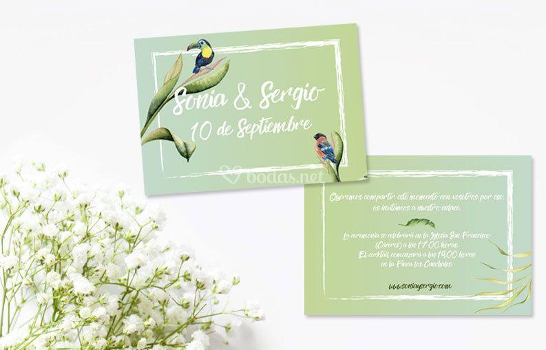 Colección birdy