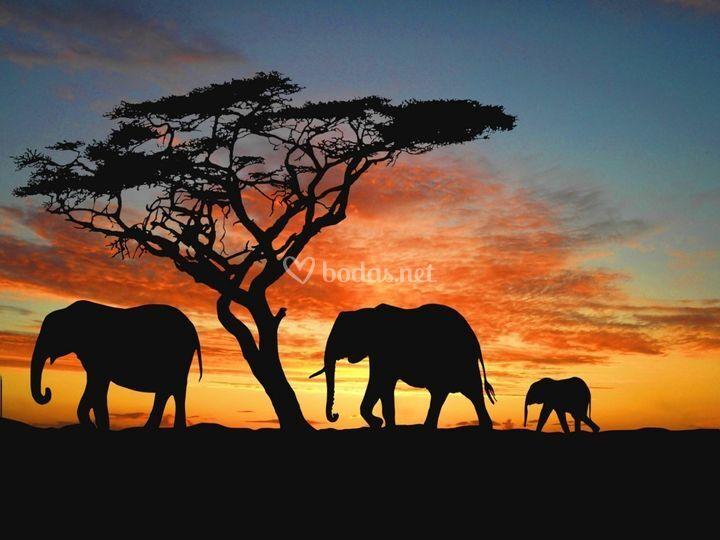 Sabana - África