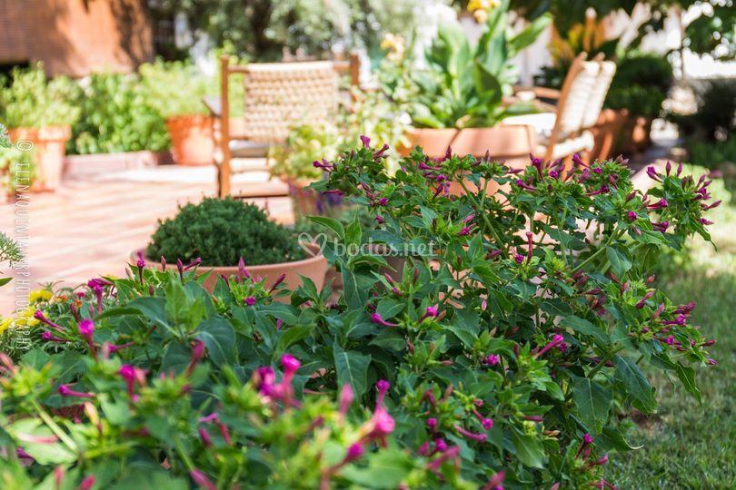 Jardin De Lagar De Muros Foto 14 - Muros-jardin