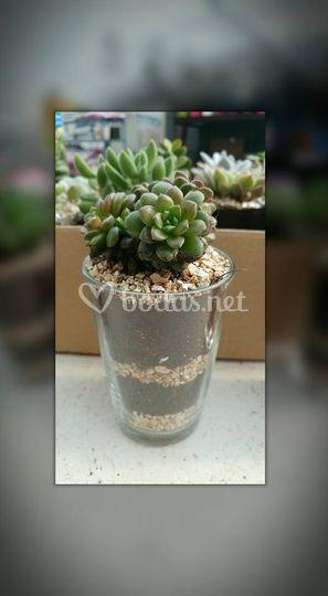 Cactus cristal