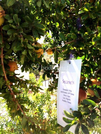 Naranjos con listas de boda