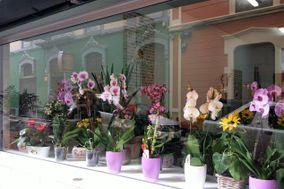 Floristería Primavera de Lola