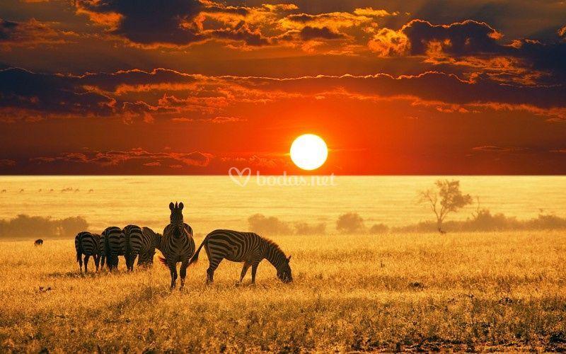 Espectacular África