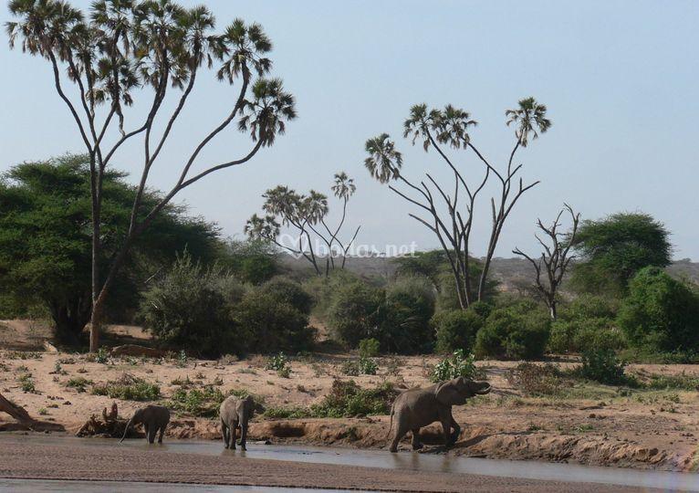 Africa oriental