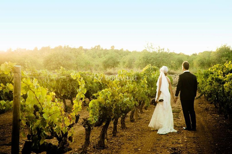 Boda entre viñedos