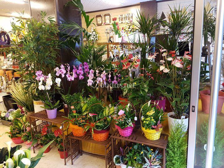 Plantas naturales en tienda de flores osuna foto 15 - Arbustos artificiales para decoracion ...