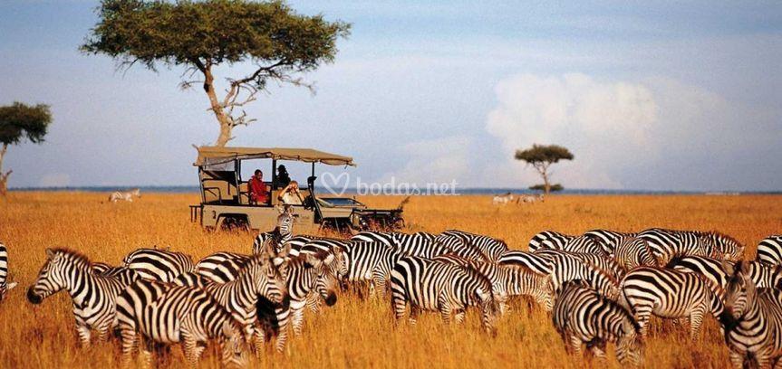 Safari fotográfico Kenia