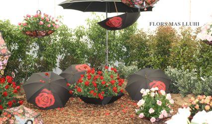 Flors Mas Lluhi