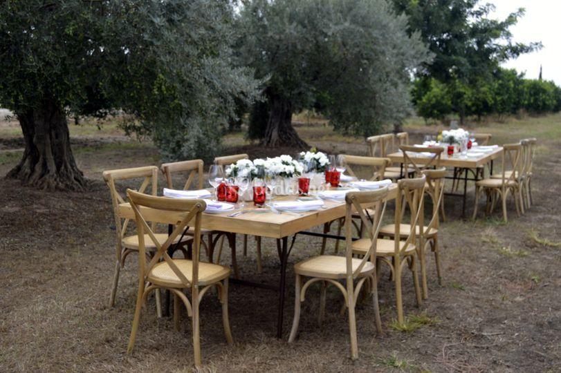 Entre olivos en la aqueria bal