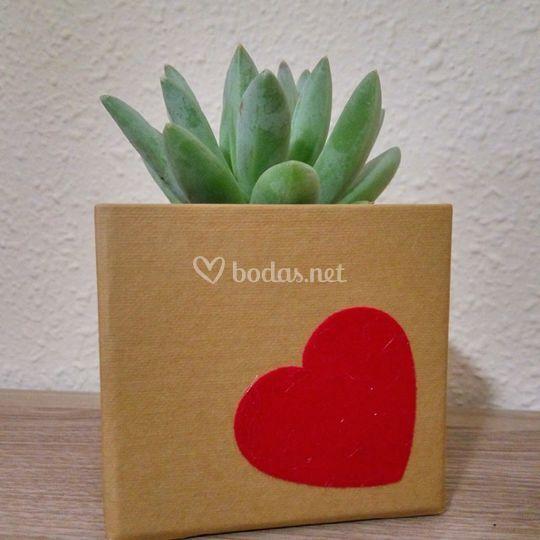 Planta suculenta en caja carta