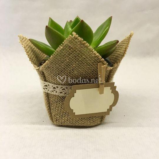Planta suculenta en yute