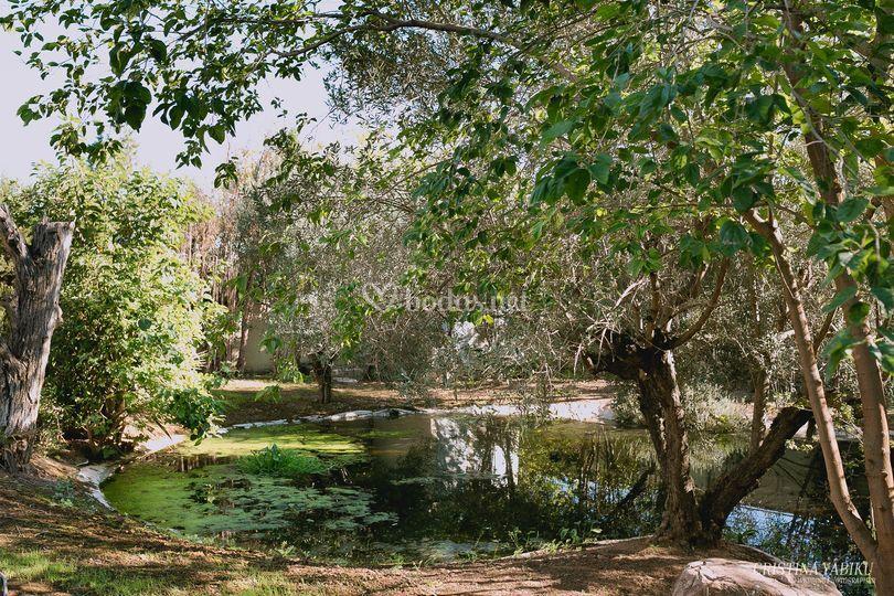 El estanque salsia catering for Estanque natural