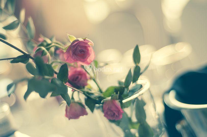 By mt fotos