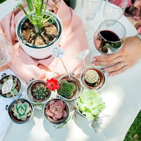 Cactus y suculentas para bodas