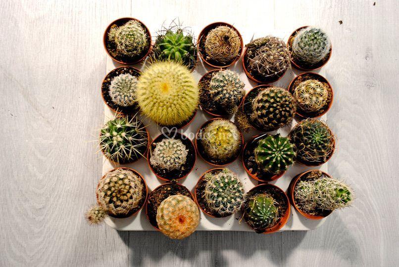 Mix cactus