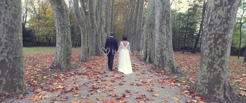 Pasillo de árboles