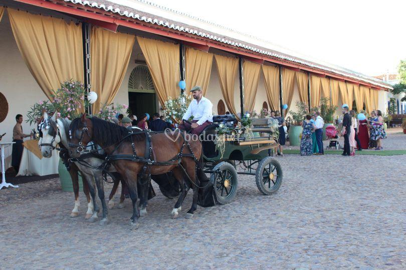 Opción de coche de caballos
