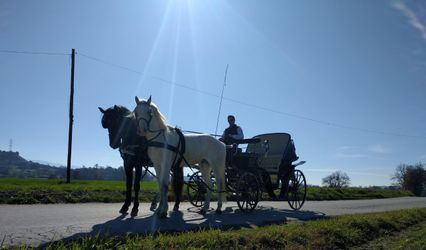 Cavalls 1