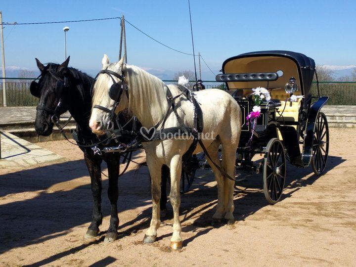Coche con caballos