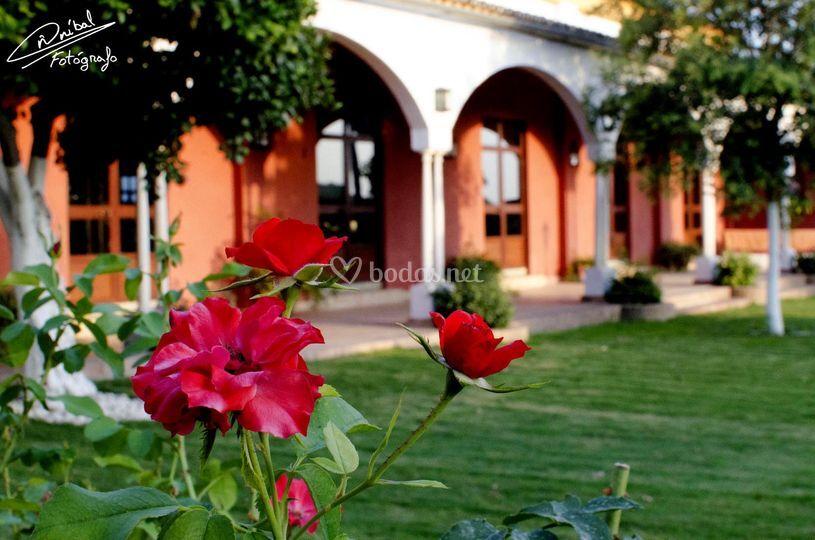 Verdes y rojos jardines