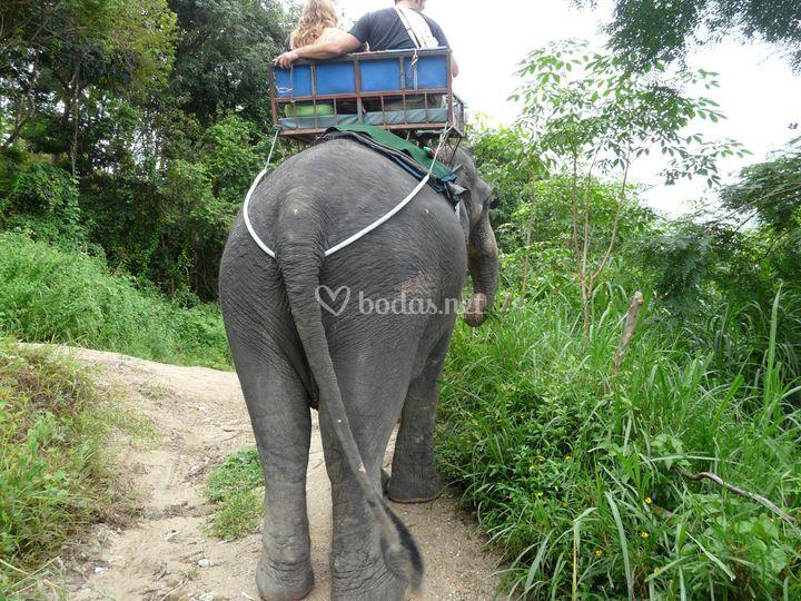 Tailandia safari elefante