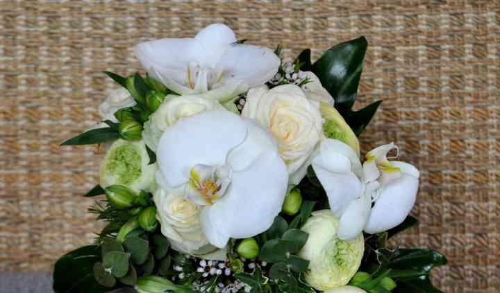 Ramo orquídeas caída natural