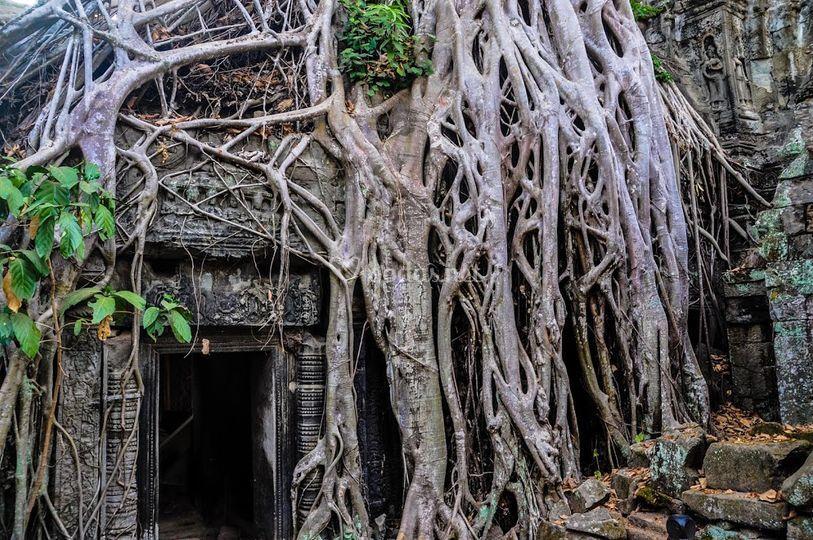Angkor Wat - Camboya