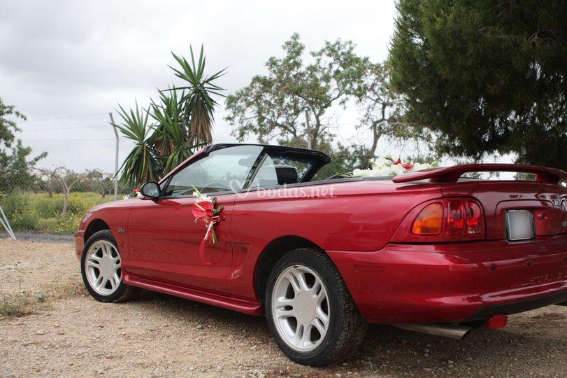 Mustang detrás