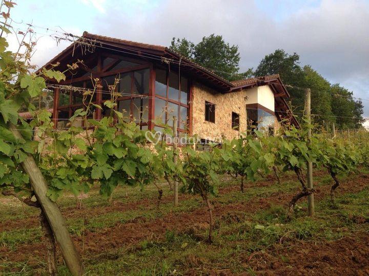 Fachada y viñedos