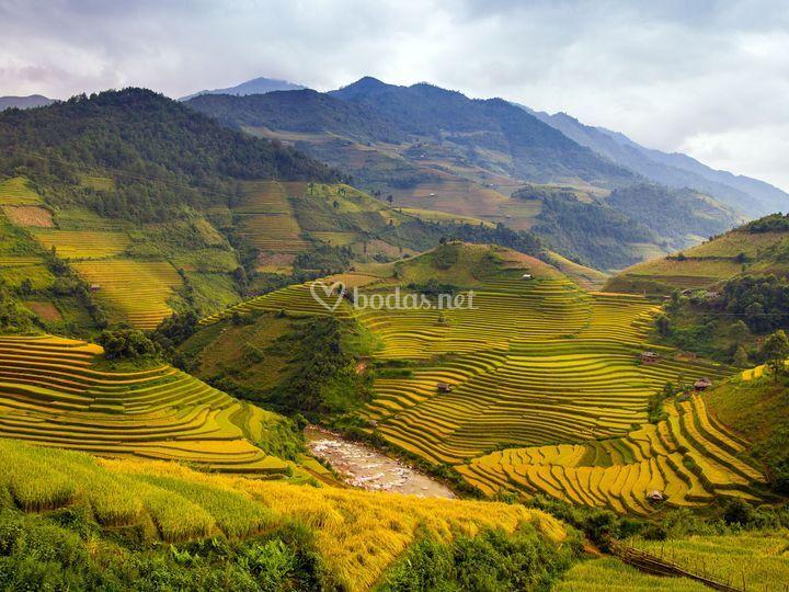 Vietnam Terrazas de arroz