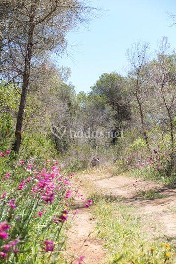 Camino privado a Cala Turqueta