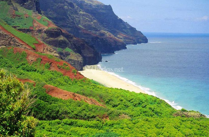 Paradisiaca Hawai