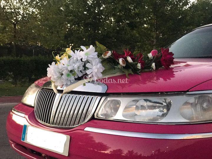 Lincoln rosa