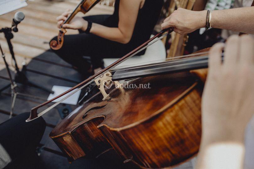Violines ceremonia