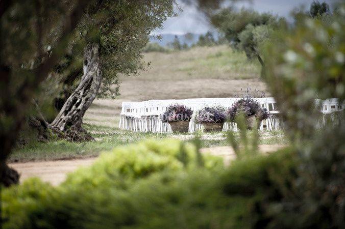 Ceremonia en el olivar