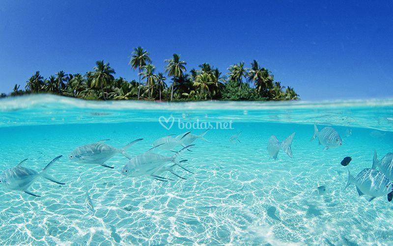Déjate enamorar en Maldivas
