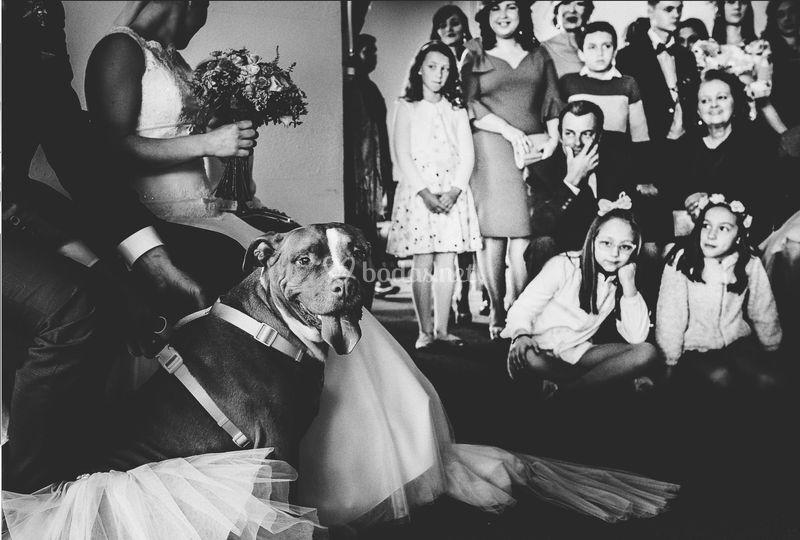 Carlos cayuela © boda huelva