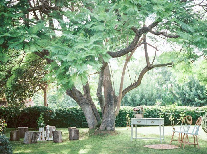 Boda bajo árbol milenario