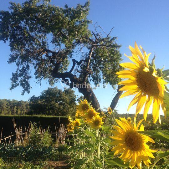 Jardines y huertos ecológicos