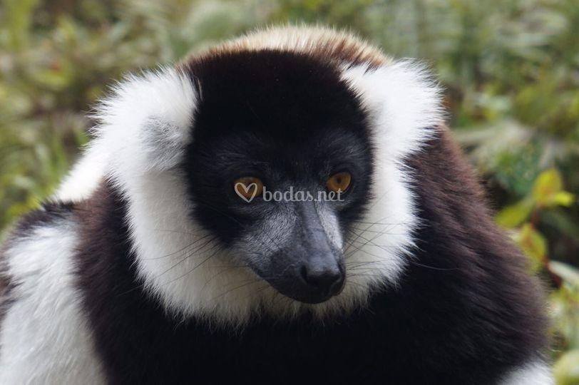 Madagascar(foto cliente)
