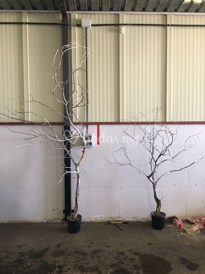 Creación de árboles entrada