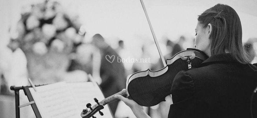 Violinista en enlace al aire libre